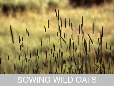 SOWINGWILDOATS