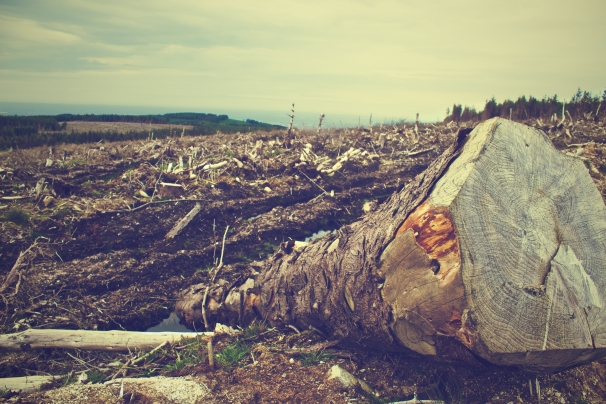 field-fallen-tree-tree-clearing.jpg