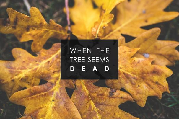 when the tree seems dead.jpg