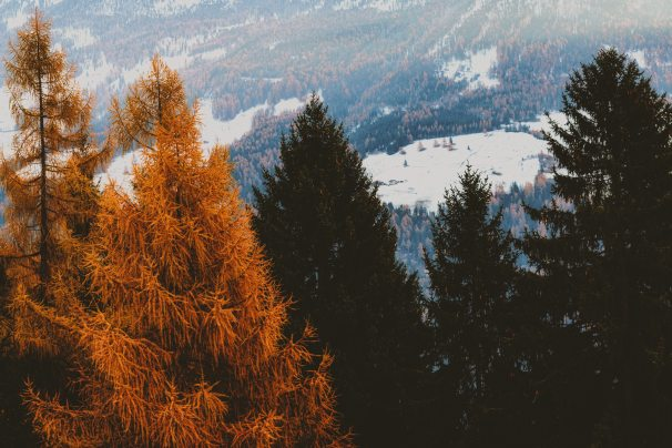 cold-conifers-environment-774861.jpg